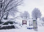 冬の西山公園